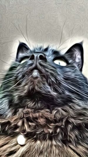 Edited With Superphoto App. I Love My Cat Cat Life Pets Master Grimly
