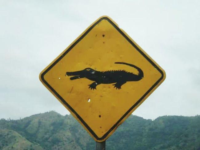 East Timor Crocodile Beware