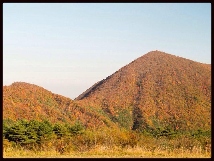 Japanese autumn leaves. Nature