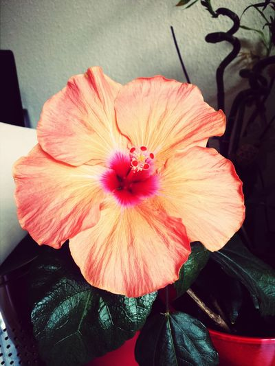 Details Of My Life Hibiscus Love Flower