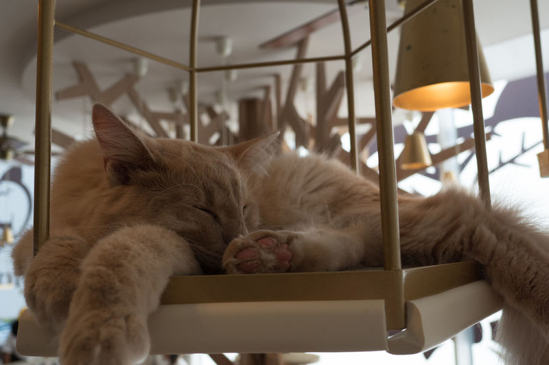 Cat Sleeping On Decoration Hanging At Home