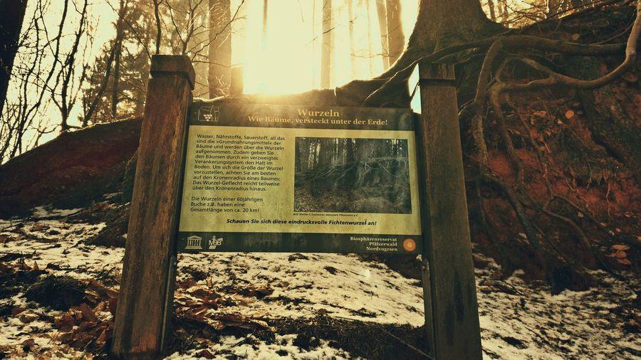 Informationen über das Leben der Bäume unter der Erde Informationen Leben Baumwurzeln Unter Der Erde