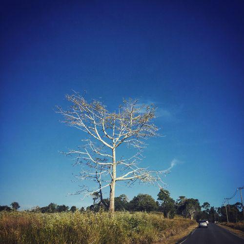 Sometime alone it better. First Eyeem Photo Sky Tree Bigtree Roads