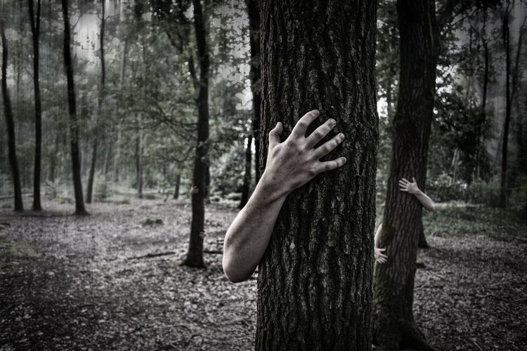 Cropped hands hugging trees in forest