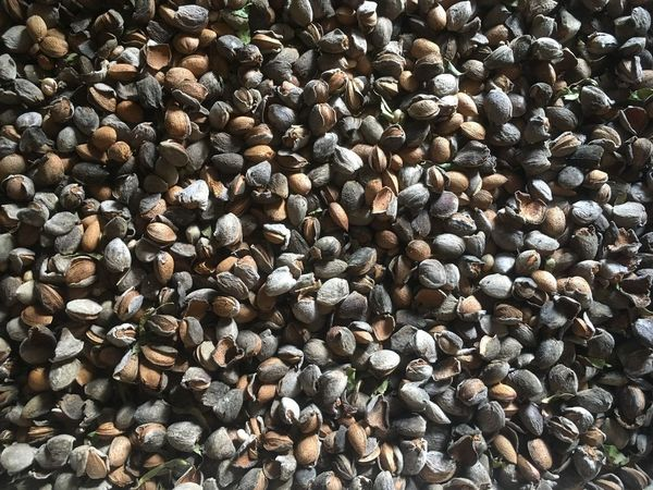 Abundance Full Frame Large Group Of Objects No People Backgrounds Nature Beach Pebble Beach Day Close-up Outdoors No Filter, No Edit, Just Photography