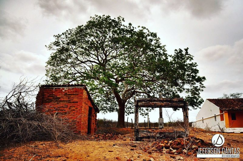 Abandoned house by tree on field against sky