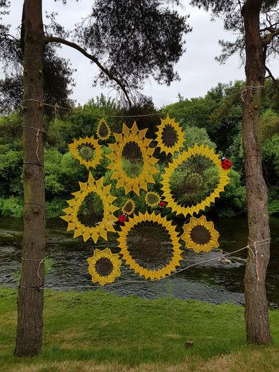Art And Craft Trees Yarn Bombing Crochet Flower Ladybirds Ladybugs Sunflowers