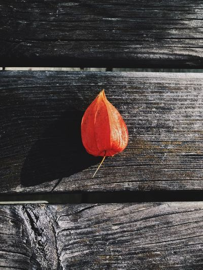Simple joys of nature Orange Color Food No People Food And Drink Day Wood - Material Still Life Fruit Close-up Textured  Red Healthy Eating Nature High Angle View Outdoors Wellbeing Sunlight Single Object Table Freshness