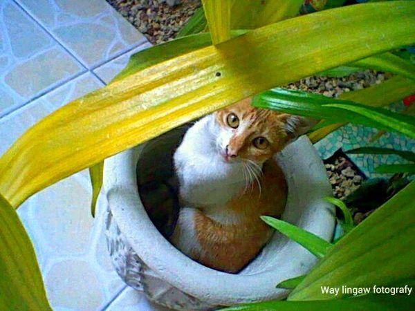 when a cat thinks she's a plant.. hala cgey. strike a pose. tingnan lang natin kailan ka mamumunga at mamulaklak. Cats 🐱 Feeling Model Gata ♡ Cute Pets😻