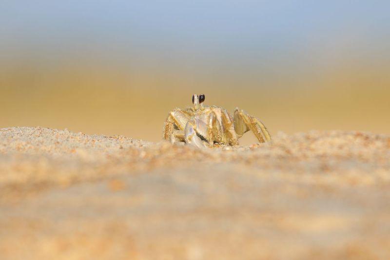 Crab EyeEm