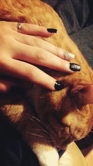 Cat♡ Mycat♥ Lovemycat♥ Nails <3 ILoveMyNails💅 Black&white Unhas *-* Preto & Branco Noir Et Blanc Ongles