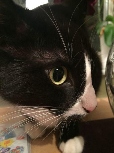 Exploring Cat Feline Sweden Doris Animal