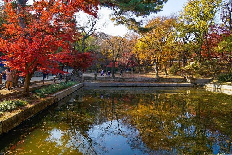 Autumn Tree Leaf Change Nature Reflection Beauty In Nature Water Tranquility Tranquil Scene Scenics Outdoors Environment Park - Man Made Space Maple Tree Lake Landscape Day People Travel Destinations
