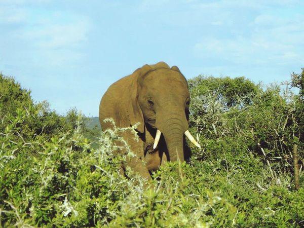 South Africa Elephant Animal Themes Animals In The Wild Safari Animals Nature Animal Wildlife Addoelephantpark