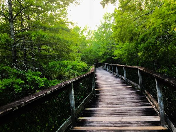 Beautiful green swamp Plant Tree Railing Connection Bridge Green Color The Way Forward Footbridge Beauty In Nature Water Bridge - Man Made Structure No People Built Structure Nature Growth Tranquility Direction Architecture Footpath Day