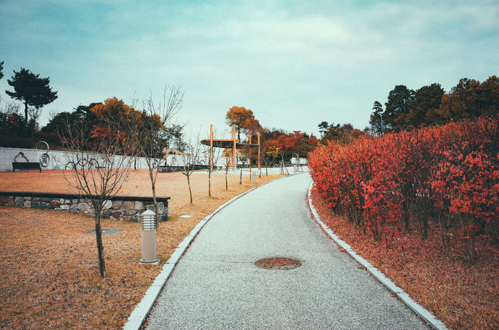 ricoh gr2 Beauty In Nature Day Freshness Growth Nature No People Outdoors Red Road Sky Tree