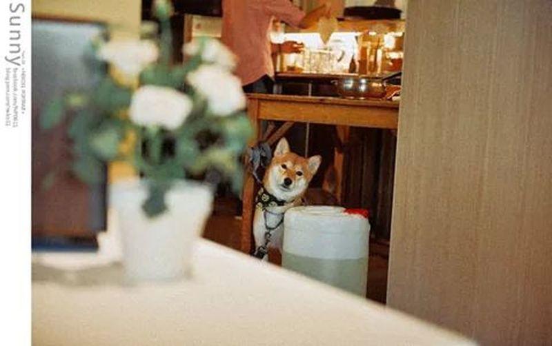 Photography Cute Pets 台南 太妃
