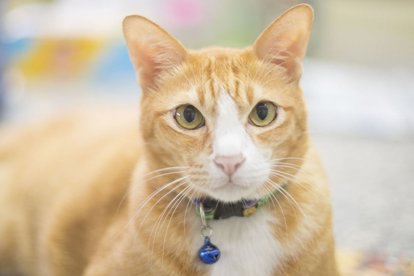 Animal Themes Close-up Day Domestic Animals Domestic Cat Feline Focus On Foreground Looking At Camera Mammal No People One Animal Outdoors Pets Portrait Whisker