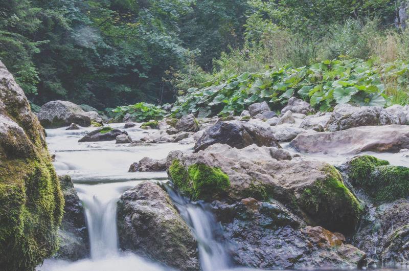 Green Nature Rocks Water Waterfall