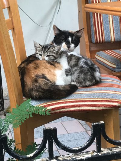 Cat kedi hayvan