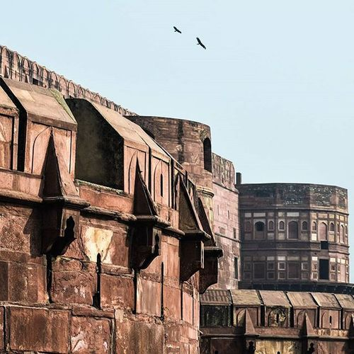 Fort Red Fort Agra India History Historic Historical Heritage Natgeoindia Natgeotravel Travel Travelling Photography TPS _soi Natgeo Instagram Sky Birds Photogrid Instapic Instalike Nikon Indian VSCO vscodaily vscogood indiaclicks