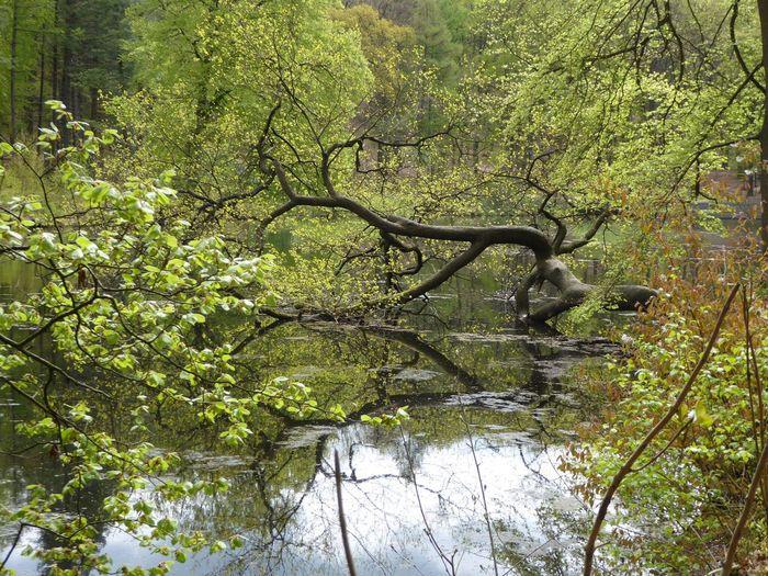 Veluwezoom Natuurfotografie Velp Nature Photography