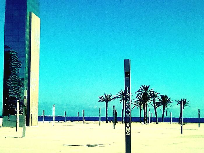 Palm Tree Clear Sky Sky Beach Blue No People Outdoors Tree Day Sea Silence Architecture Nature S