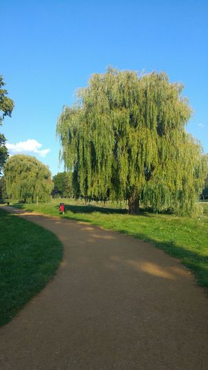 Park Walk Tree Green Color Day Pathway Pathway Through The Park Willows Nature Scenics Outdoors Beauty In Nature Clear Sky No People Grass Blue Sky