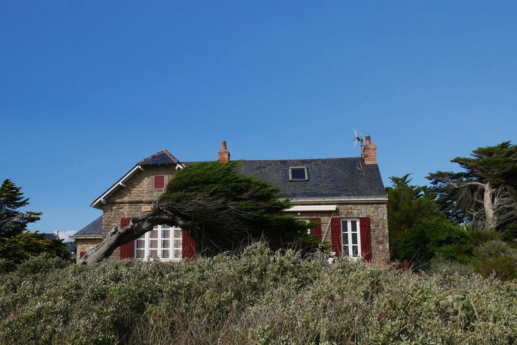 Architecture Tree Building Exterior Outdoors No People Clear Sky Day Sky Nature Wind Windy Tree Nature_collection Bretagne Piriac-sur-mer Coast Breizh Nature