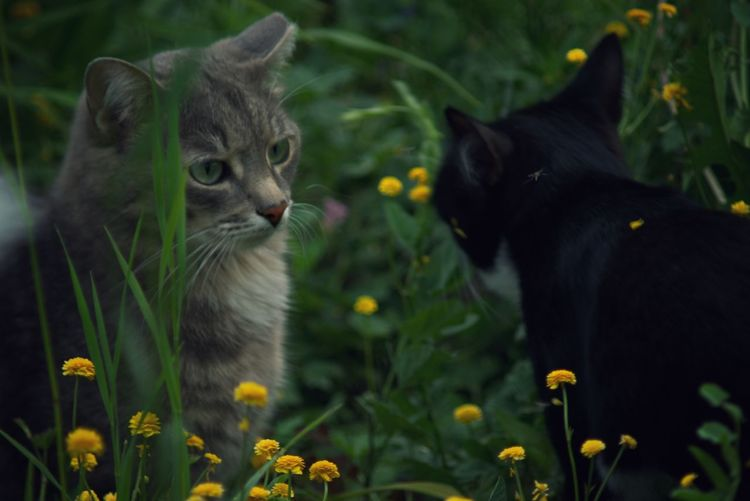 Cats in a field