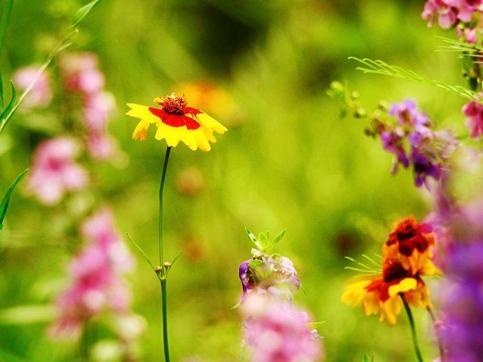 Flowers Tadaa Community EyeEm Nature Lover Gard Garden
