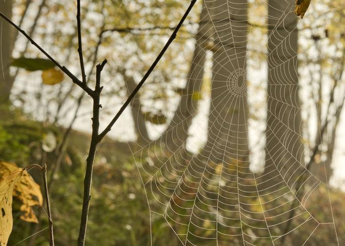 Close-up of spider web on tree