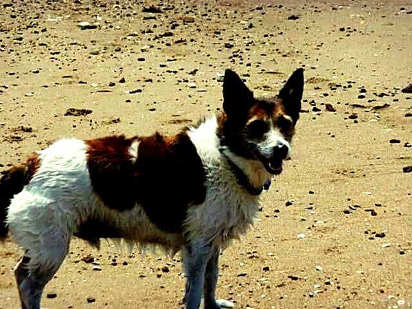 Enjoying Life Dogslife Playing With My Dog Went Swimming Taking Photos Beach Dog Life