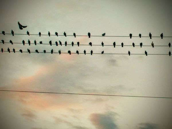 Animal Themes Bird Animals In The Wild Low Angle View Wildlife Perching Silhouette Flock Of Birds Togetherness Sky Tranquility Outline Cable Scenics Cloud - Sky Auto Post Production Filter Zoology Nature Tranquil Scene Perched
