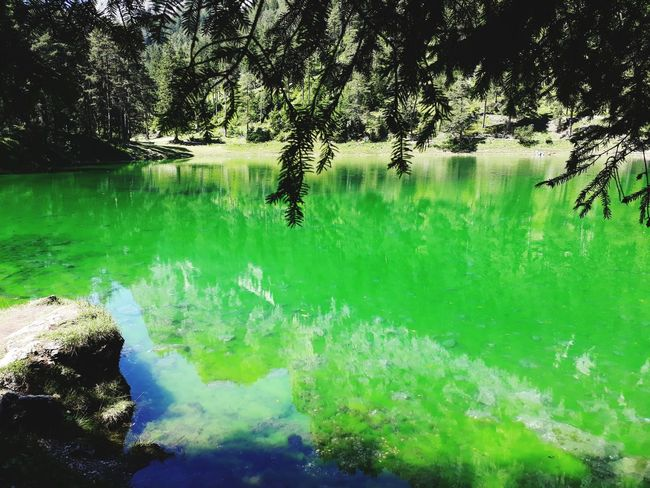 green water 🏞💚 crystal clear Grün Lake See Natur Steiermark Austria Sun Grüner See Tragöss Holiday Sunny Vacations Vacation Styria Water Green Color Nature Reflection Outdoors Day No People Beauty In Nature