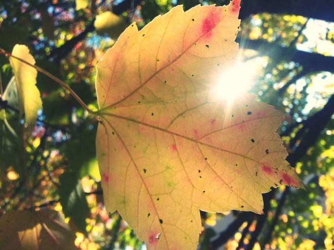 Nature Maine Fall Foliage