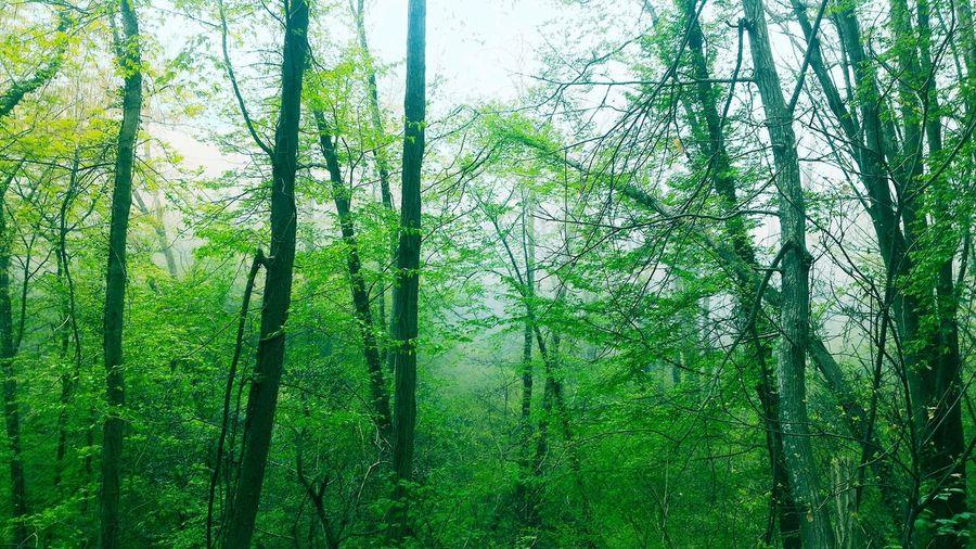 Tree Trees Wood Portofino Natural Regional Park Walking EyeEm Selects Greenery Flora Spring Green Vegetation Woods