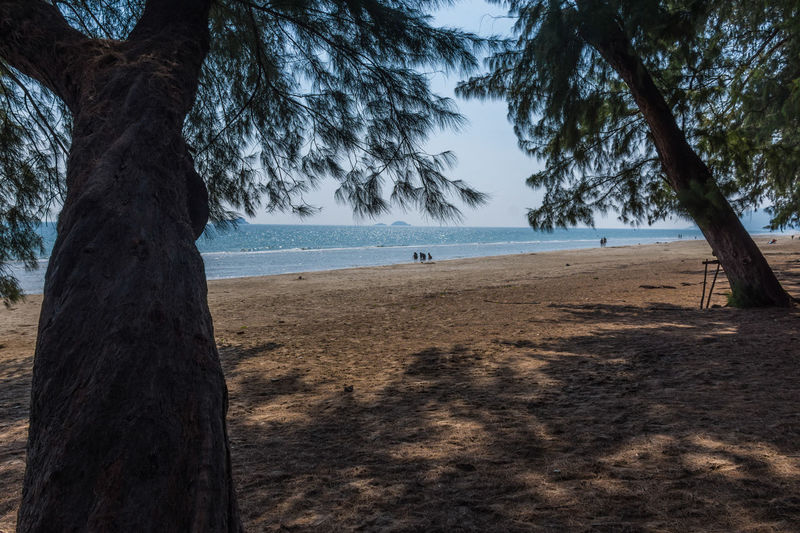 Beach Beauty In Nature Day Growth Horizon Over Water Land Nature No People Outdoors Plant Sand Scenics - Nature Sea Sky Tranquil Scene Tranquility Tree Tree Trunk Trunk Water