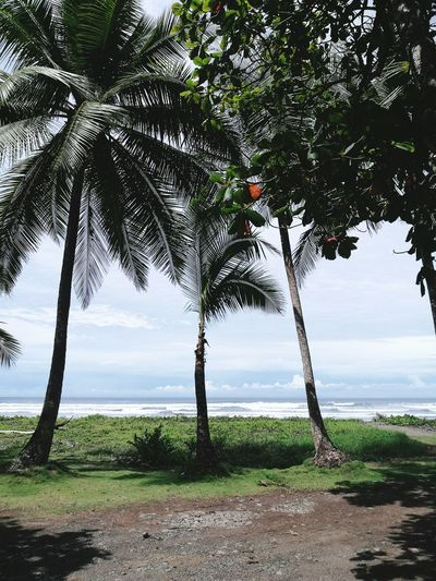 Tree Beach Sea Water Nature Beauty In Nature Scenics Outdoors Tranquil Scene Horizon Over Water Tranquility Travel Destinations Green Color Sky Summer Day Landscape Costa Rica Beautiful View Moments Little World Tranquility Beauty In Nature No People Nature