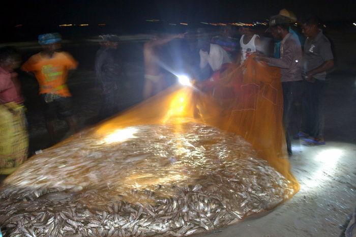 Beach Catch Of The Day Fish Fisherman Fishermen Fishernet Fishing Hard Work Sri Lanka
