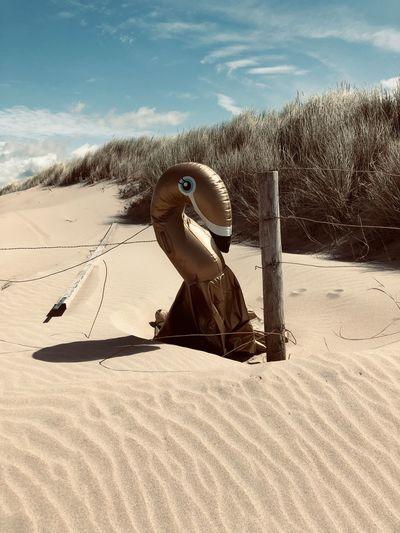 Man on sand at beach against sky
