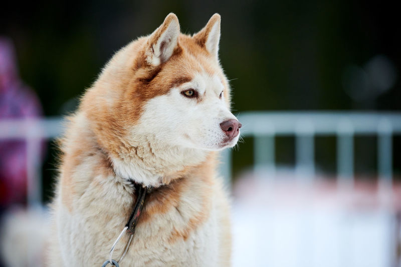 Close-up of a dog looking away