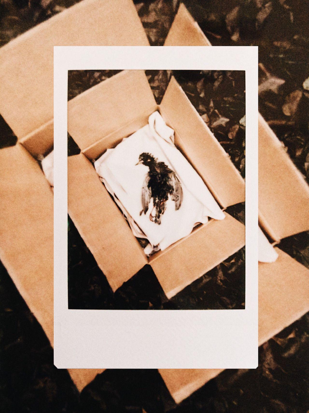 Directly above shot of bird in cardboard box