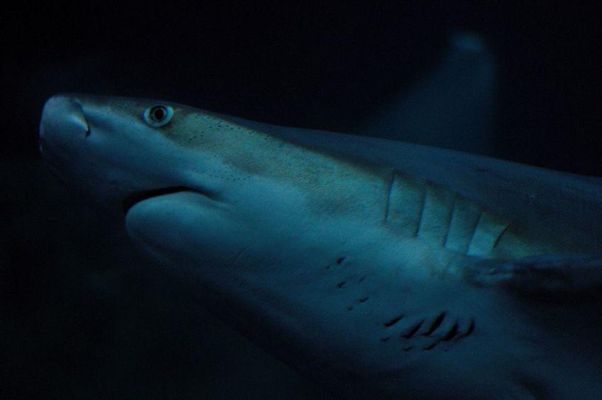 National Marine Aquarium Aquarium Plymouth Blue Night Human Body Part Star - Space Nature Astronomy Body Part Water Animal Wildlife Underwater Animals In The Wild Sea Beauty In Nature Dark UnderSea