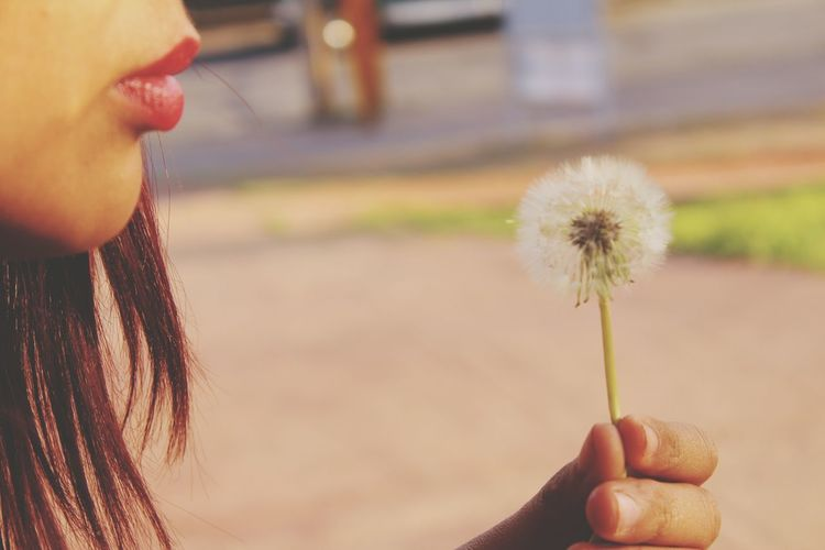 Close-up of cropped woman blowing dandelion