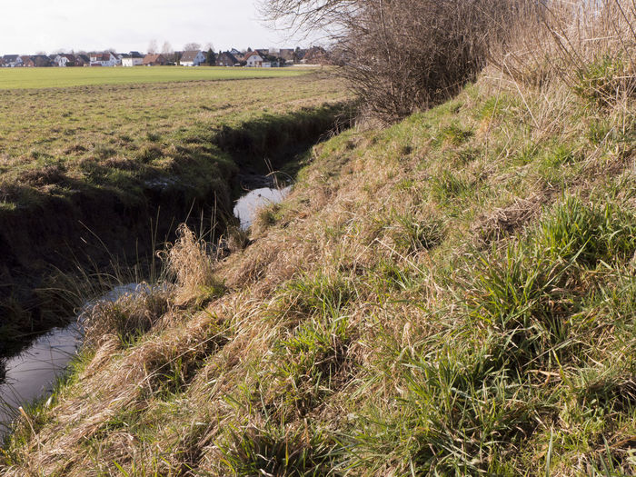 A ditch drains the adjacent meadows and fields. Plant Grass Nature Environment Tranquil Scene Day Tree Tranquility Land Scenics - Nature Landscape Field Beauty In Nature Non-urban Scene Growth Stream - Flowing Water Ditch Adjacent Dehydrated Rural Scene Agricultural Field Meadow Farm Countryside Embankment
