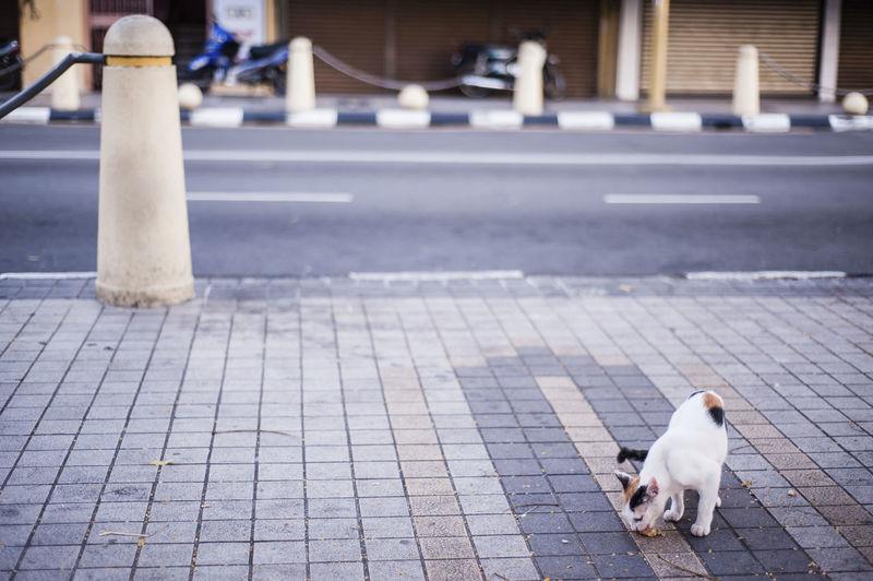 Cat eating food on sidewalk