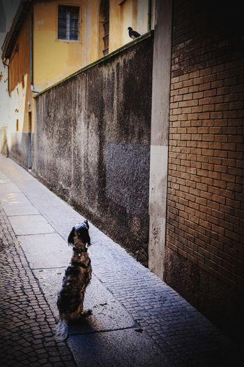 Dog sitting on footpath against building