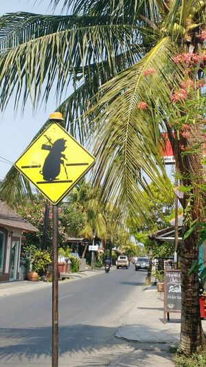 funny roadsign in Bali Funny Roadsign Bali Pig Pork Pig On A Roadsign Pig Crossing Yellow Road Sign Road Sign Road Sign In Bali This Way For Lunch Bali Hog Roast Mix Yourself A Good Time Paint The Town Yellow An Eye For Travel