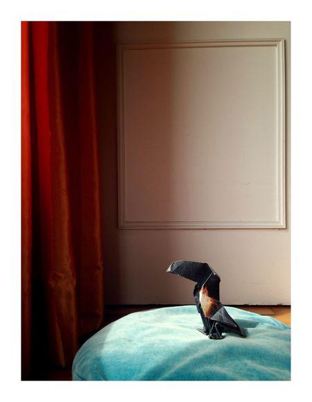 Voleur de couleurs Dunkan Origami One Animal Animal Themes Animal Indoors  Bird